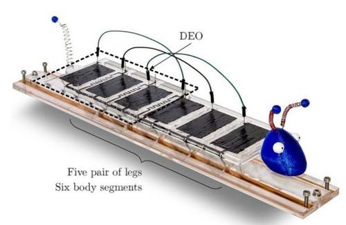 Demonstrador da tecnologia: Robô lagarta que controla automaticamente seus músculos usando neurônios artificiais. [Imagem: Gottfried Boehnke]