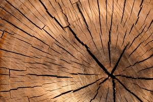Thumb_background-brown-circle-cut-40973