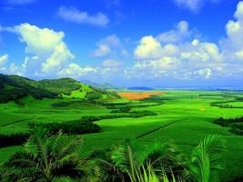 Thumb_sugarcane_plantation_in_mauritius